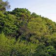 十三峠越え道-67 (稜線の緑復活)