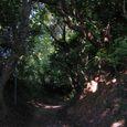 十三峠越え道-81 (森の小径-盛夏)