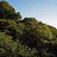 十三峠越え道-83 (最盛期を迎えた稜線の緑)