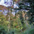 十三峠越え道-35 (絡み付く植物)