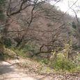 十三峠越え道-100 (春を待つ坂道)