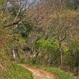 十三峠越え道-103 (春の坂道)