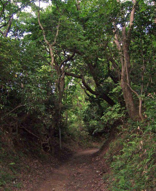 十三峠越え道-74 (森の小径-夏-)