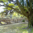 大阪市天王寺区真田山にある旧陸軍墓地-2