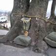 玉祖神社 3:大楠の木、根本の和合石