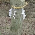 玉祖神社 6:お百度石