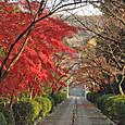 宗像神社参道から真如堂を眺める