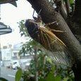 冬の蝉―ある蝉の根性物語―