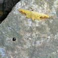 越冬する昆虫たち (十三峠越えの道にて)