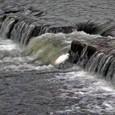 鴨川の小鷺
