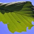 葉っぱの上で安らう毛虫の赤ちゃん