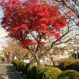 玉串川秋景-5
