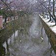 降りしきる雪と小鷺 (玉串川)