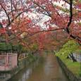 雨が降る秋色の玉串川
