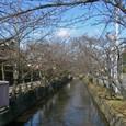冬の陽に映ゆる玉串川